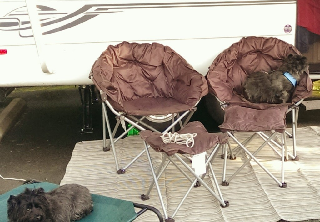 Folding lounge chairs and ottomans, in front of Toto the trailer, with terriers attending.