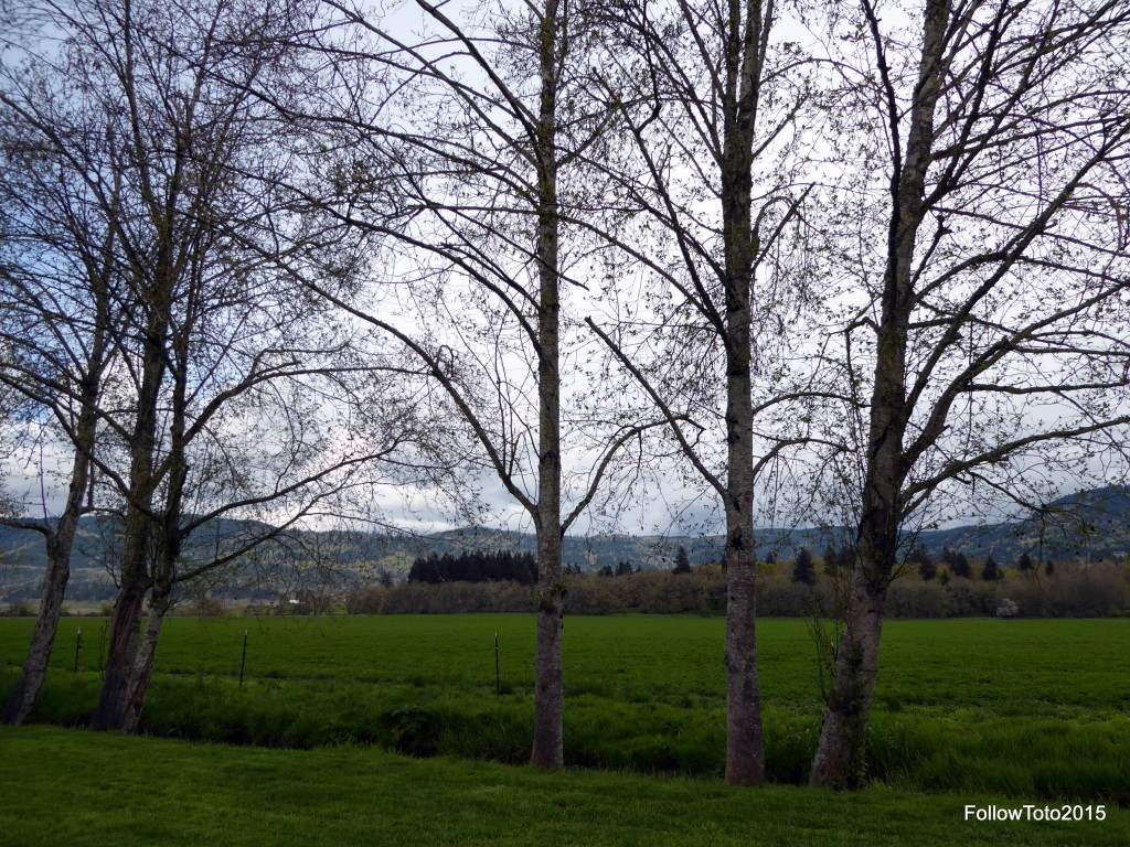 View East from Premiere RV Resort of Eugene, OR.  Fields, hills, trees, nice.