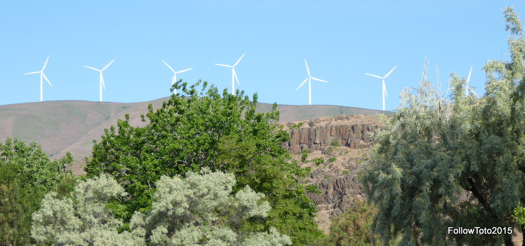 Wind turbines above the gorge.