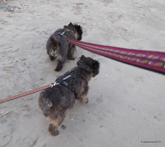 Wally and Tyler prepare to cross leashes.