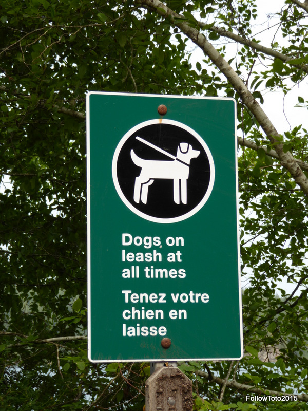 Multillingual 'Dogs on leash at all times' sign