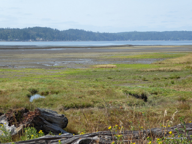 Tidelands along the shores of Belfair State Park