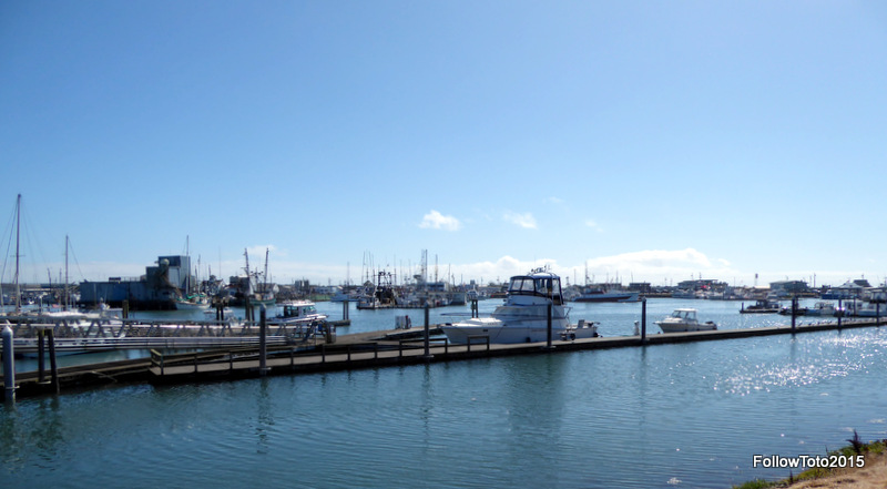 Part of a marina at Westport, WA, USA.
