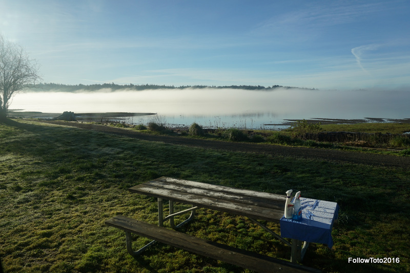 Mornings brought fog to the Hood Canal. Or fog brought the mornings. How can we know?