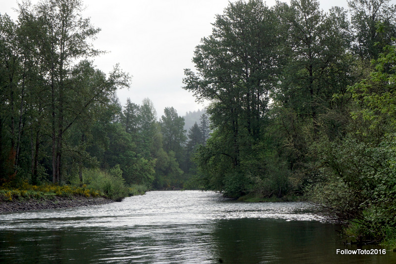 Waterloo County Park, which is in Linn County, Oregon, hugs the south bank of the South Santiam River. The terriers refused to go swimming here.