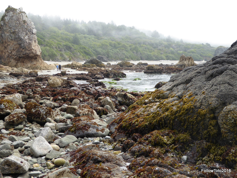 The tide pools were pretty much like you'd expect. Water, anemones, crabs, and some flora. Mostly it just felt good to stand there and take it all in.