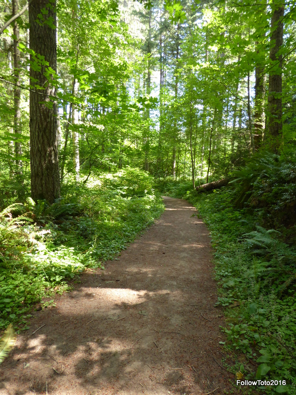 This little path ran right behind our campsite and became a favorite of Tyler and Wally.
